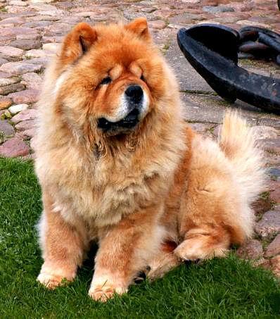 Image Result For Can Dog Barking