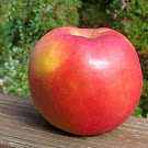 Red-blushed apple with a faint yellow spot
