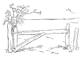 fence country download tree digital