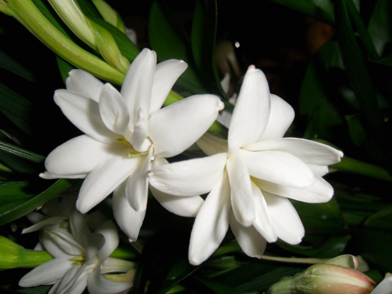 Imagenes de Amor, Flores Blancas, parte 4