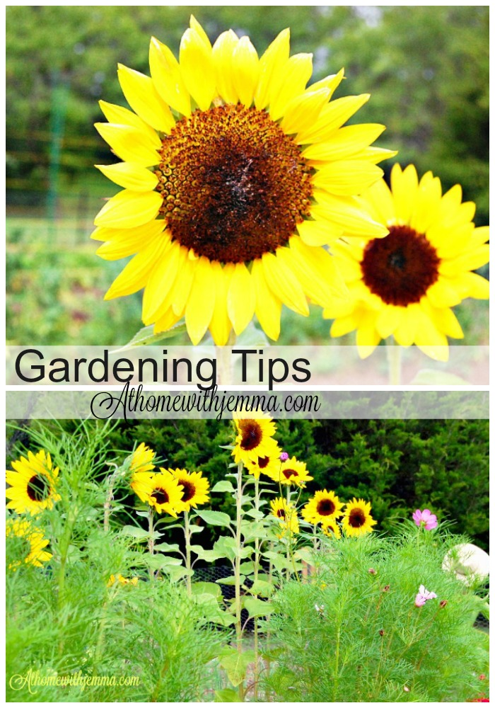 The Dance Of The Garden Gardening Tips At Home With Jemma