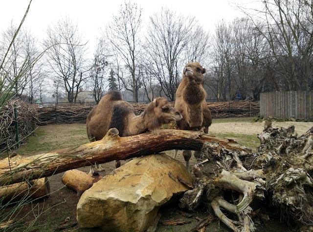 Wrocławskie zoo