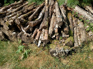 A pile of felled logs
