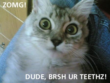 Dude, Brush Your Teeth, funny cat meme
