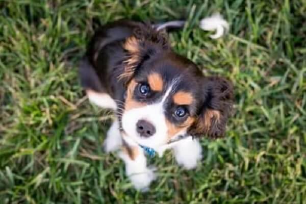 approval adoption dog