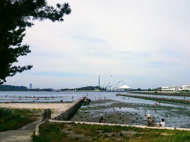 横浜 金沢 野島公園 潮干狩り