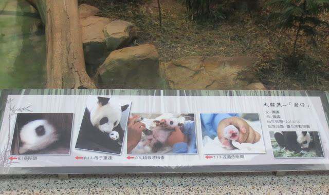 Taipei Zoo - Pandas