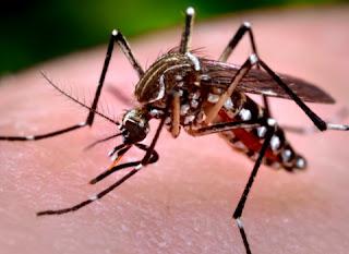Mais de 200 mil militares atuarão no combate ao Aedes aegypti neste sábado