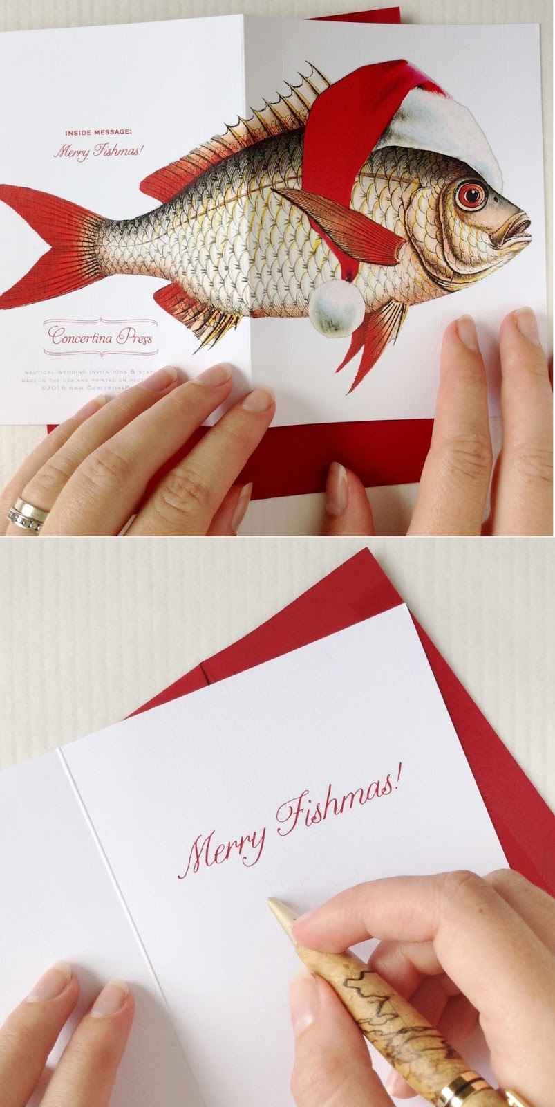 Fish Christmas Card Set from Concertina Press