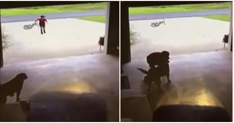 Vídeo registra garoto que invadia garagem para ganhar abraço de cadelinha