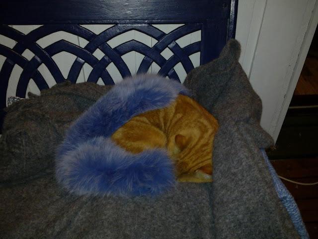 penkki, kissa, keltainen kissa, sininen penkki