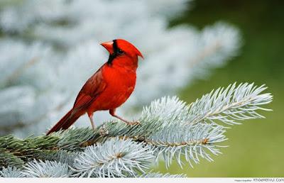 Giải mộng lô đề khi mơ thấy chim