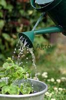 berkebun, benih, tanaman, benih tanaman, lmga agro