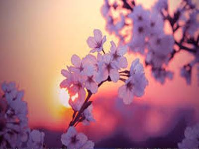 Blooming Flower 1 imagesoflove
