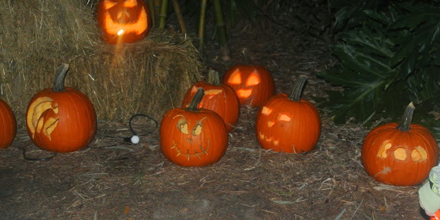 Pumpkins, Fall Festival, Florida