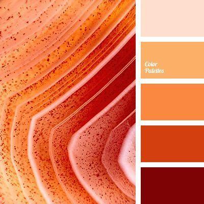 paleta-cores-coral