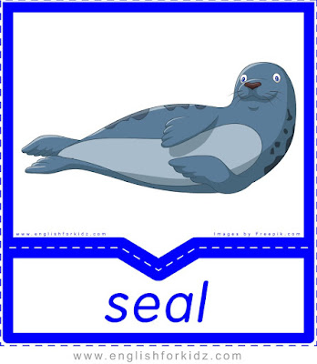 Seal - printable Arctic animals flashcards for English learners