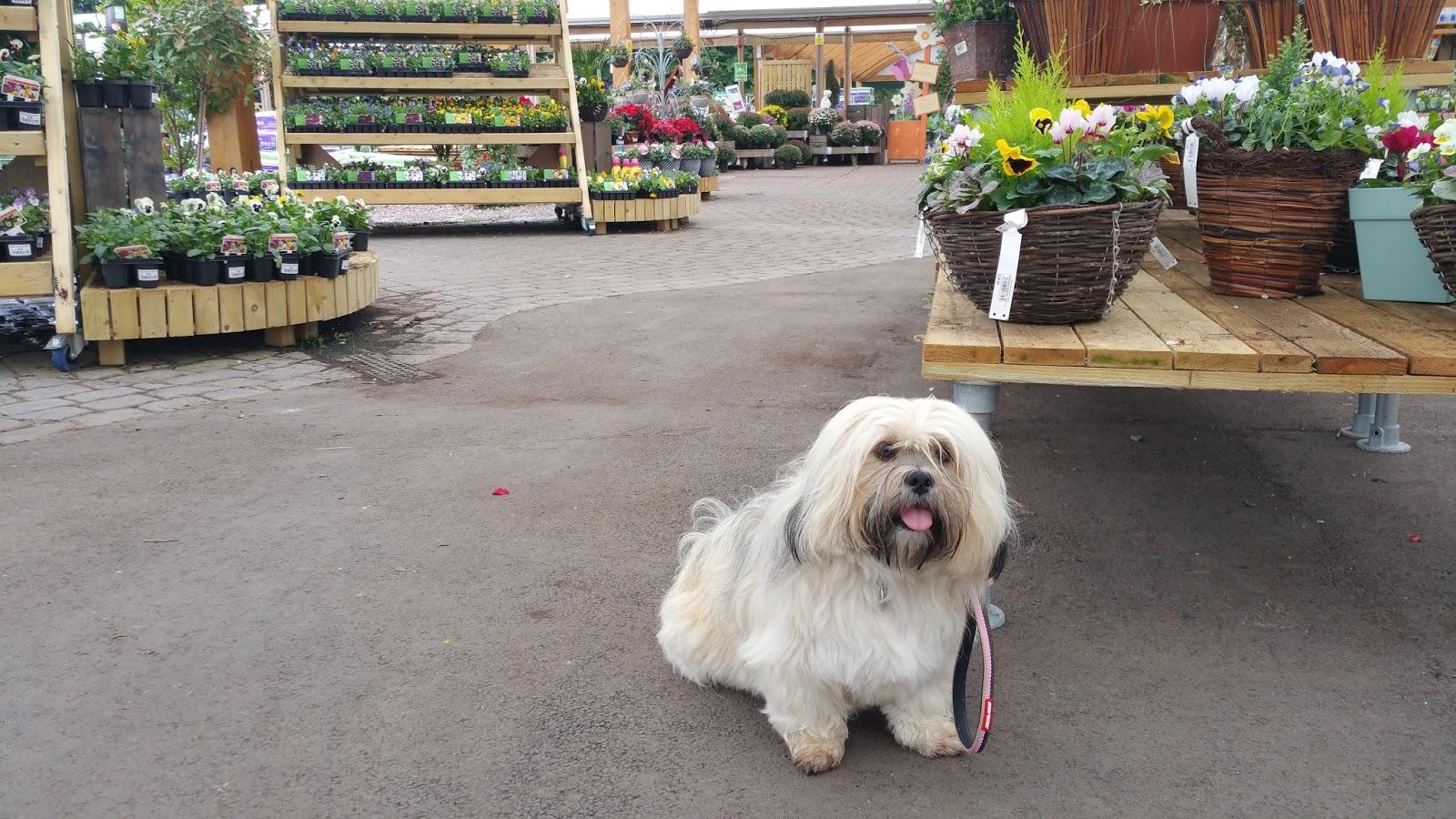 Home Dog Boarding Nantwich