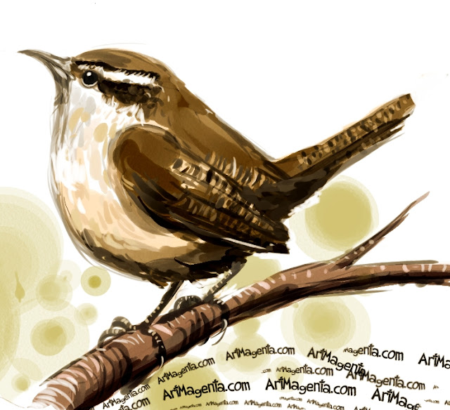 Carolina Wren sketch painting. Bird art drawing by illustrator Artmagenta