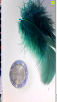 Feder Münze: Depstech 5M USB Wasserdichte Digital Inspektionskamera Endoskop Rohrkamera Borescope mit 6 Einstellbare Weißen LED (7mm) DSNKJ0001