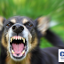 Mangsa ke 11 Rabies di Sarawak