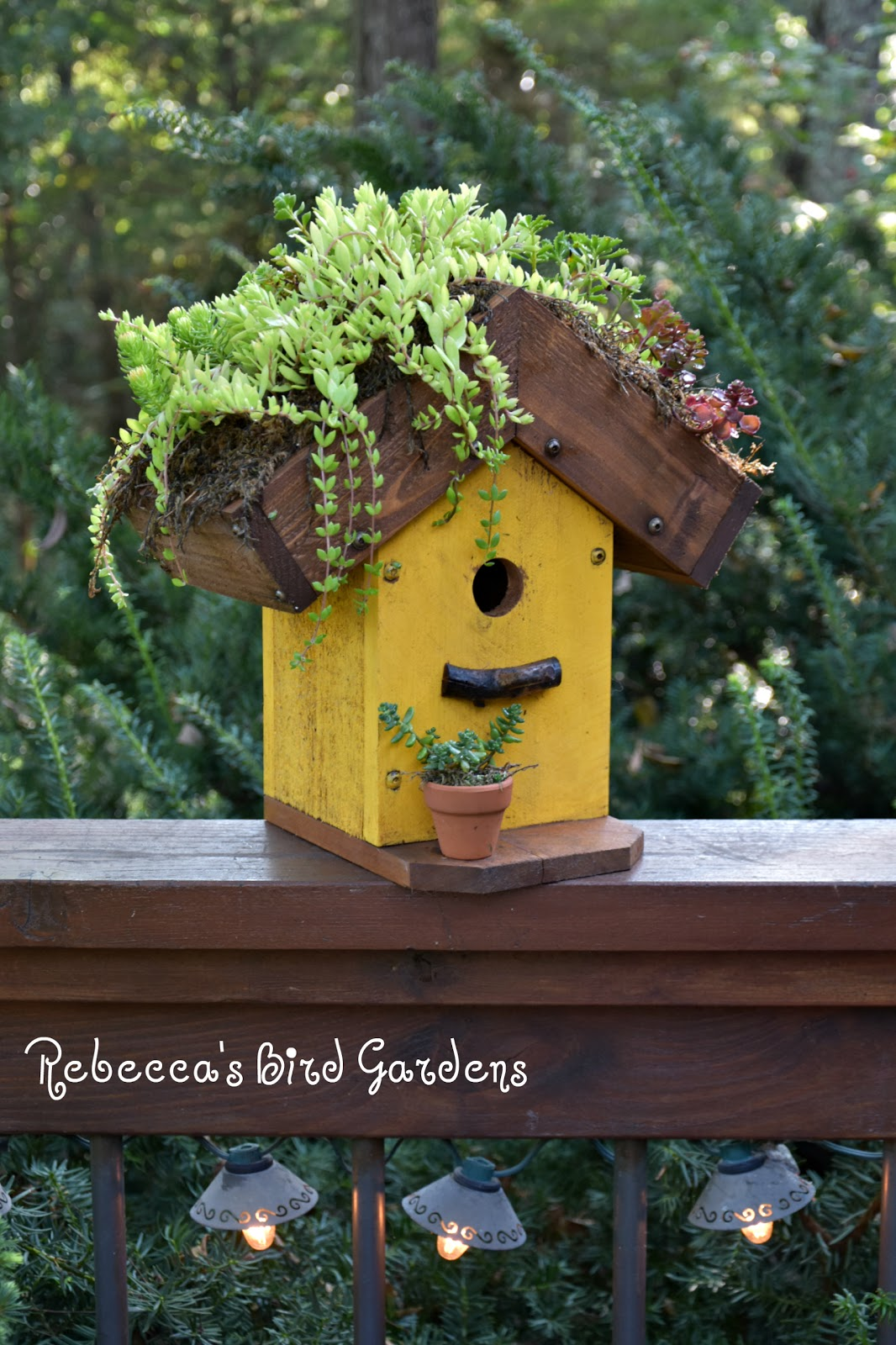 Rebecca S Bird Gardens Blog
