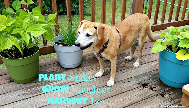 Plant Smiles Grow Laughter Harvest Love - Happy Dog