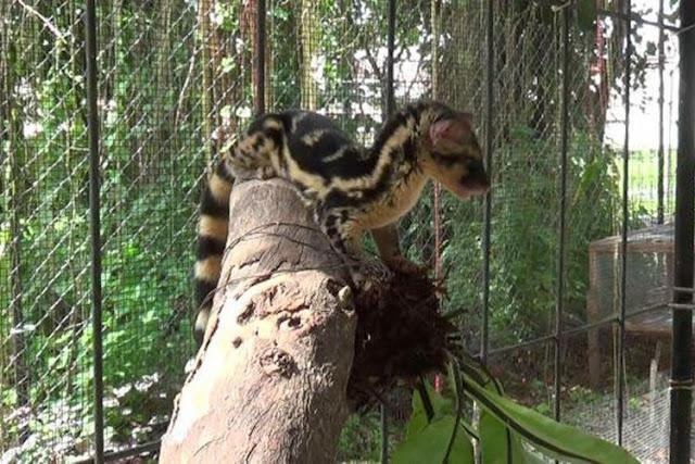 Hewan Langka ini Ditemukan di Bangka Belitung