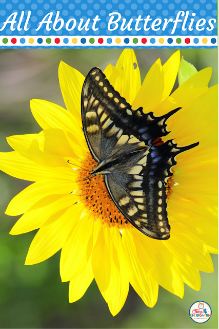 All About Butterflies: Resources to teach the life cycle of the butterfly. Books, video links lessons and activities for kindergarten.