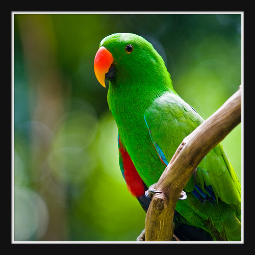 Beautiful Green Parrots Wallpapers
