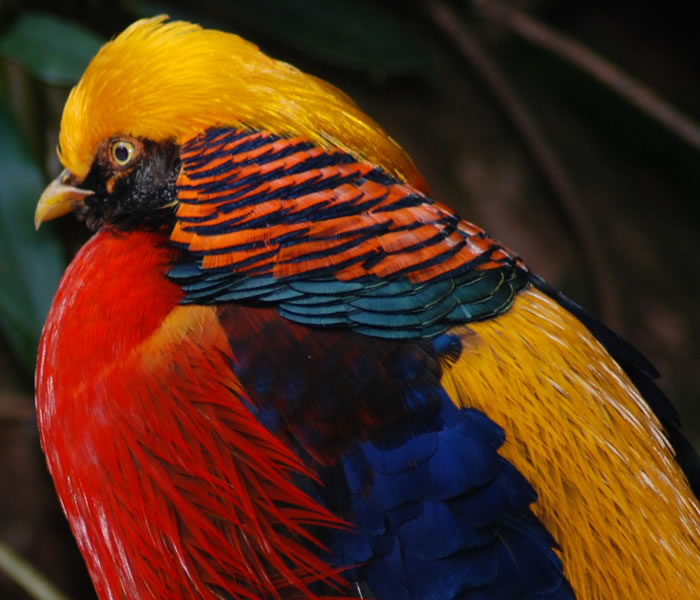 Beautiful Bird Basic Facts & Pictures