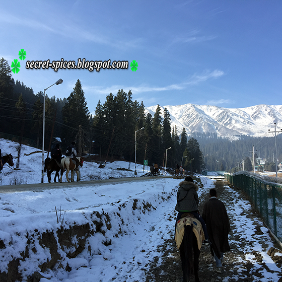 Fantastic Gulmarg with pony ride in Kashmir, India