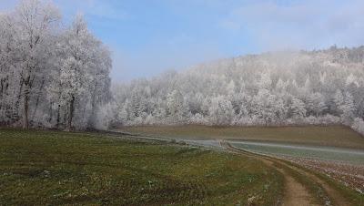 Landschaft bei Höngen