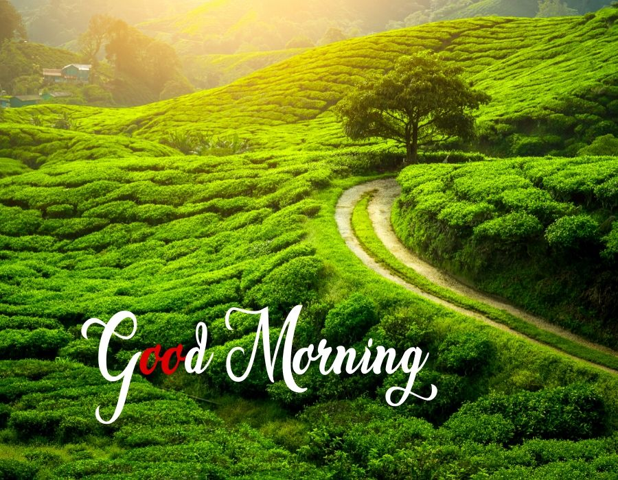 Good Morning Pic Download