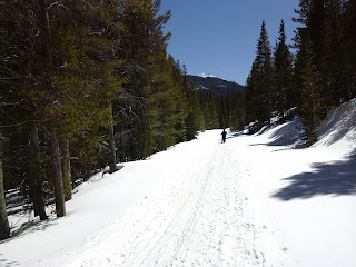 Cross Country skiier on a road in the Rocky Mountains on a sunny day with trees all around.