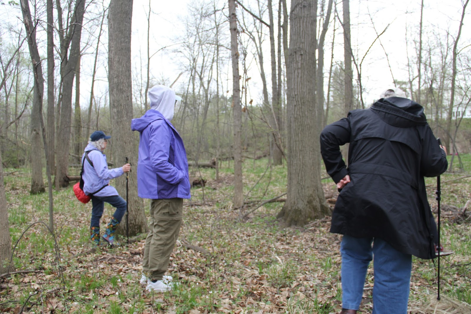 On Sunday 06 May I Led A Wildflower Tour Of The Chippewa Watershed Conservancys Williams Blackburn Preserve After Having Beautiful Weather For Several