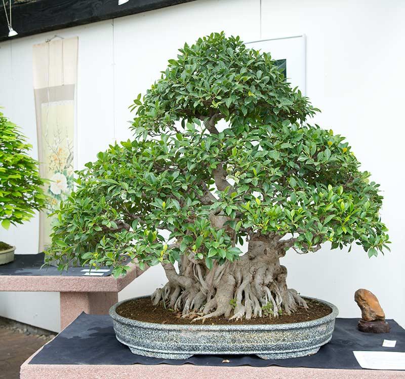 visit to bonsaizentrum heidelberg in germany walter pall bonsai adventures howldb. Black Bedroom Furniture Sets. Home Design Ideas