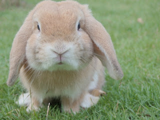 Amazing Rabbit Facts in Hindi