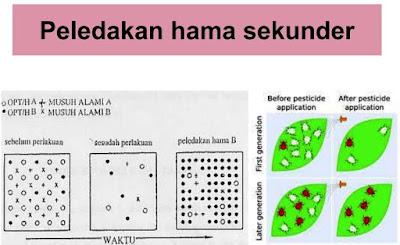 peledakan hama akibat pestisida