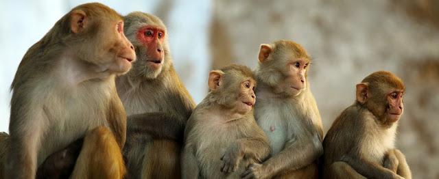 Monos y comunicacion
