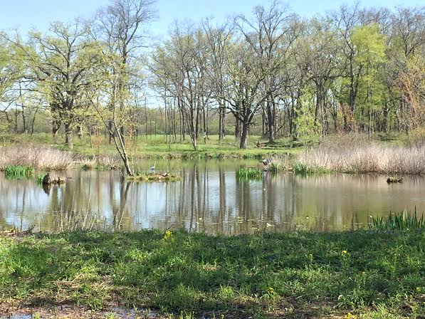 Lake at Crabtree Nature Center
