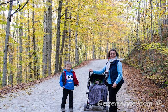 altın sarısı yapraklı kayın ağaçları arasında oğullarımla yürürken, Yedigöller Milli Parkı Bolu