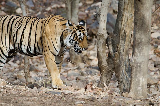 Sanjay National Park Madhya Pradesh