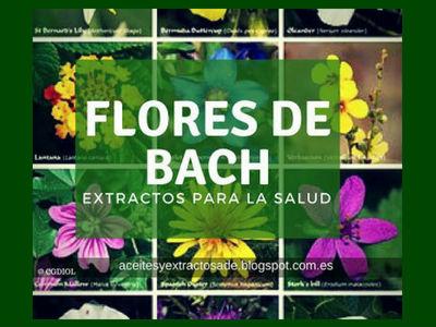 Las Flores de Bach medicina alternativa con esencia florales que no tienen ninguna contraindicación