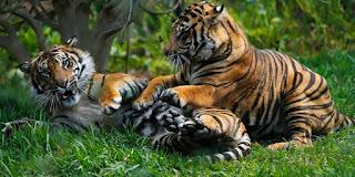 900+ Contoh Gambar Hewan Fauna Gratis