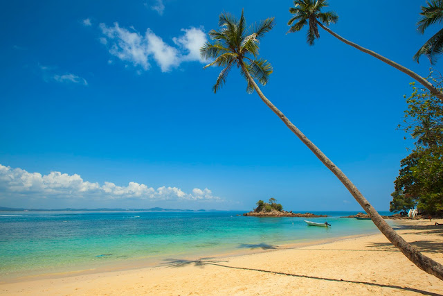 Coconut Palm Beside Under Blue  Sky HD Wallpaper