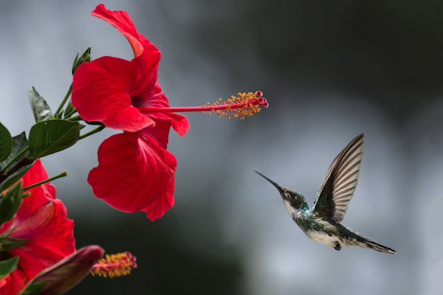 5 Flowers Which Attract Hummingbird Comes To Your Garden