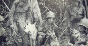 Do Dogs Have Connection To World War