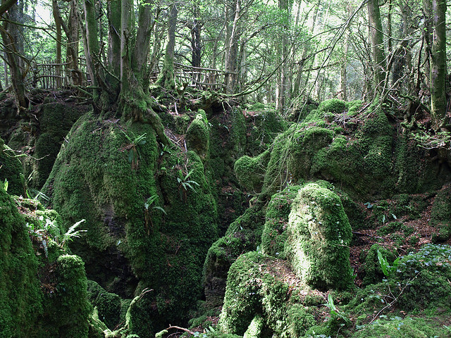 Forest Of Dean Lord Of The Rings