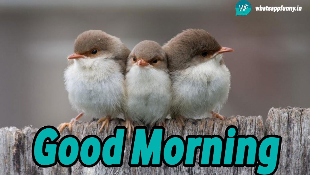 birds good morning pictures